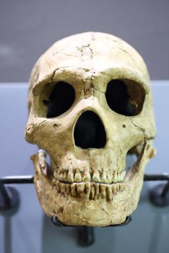 Acredita-se que o homem de Neandertal realizou as primeiras pinturas rupestres da história.