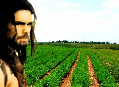 O domínio da agricultura significou o alcance de um ganho inquestionável?