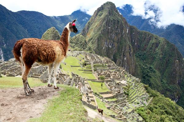 O lhama era um dos animais mais importantes para a economia inca