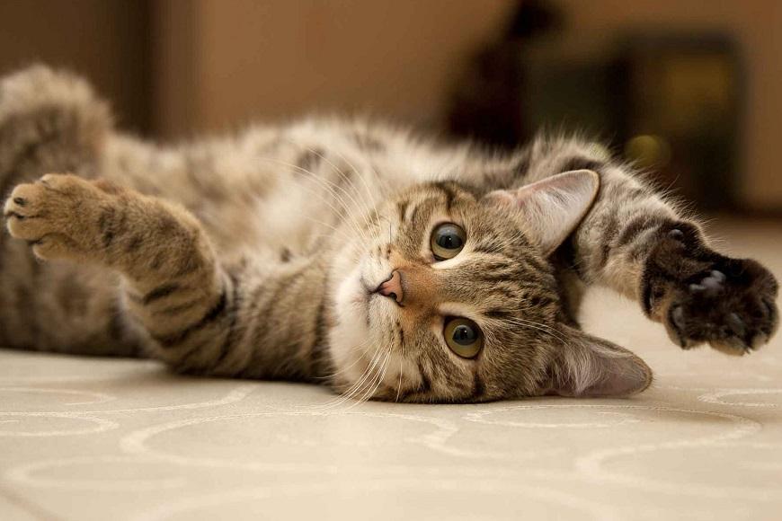 O gato teve diversos usos e significados ao longo da história humana