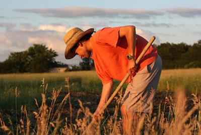 O objetivo das Ligas Camponesas era distribuir terras aos camponeses no Brasil através da Reforma Agrária