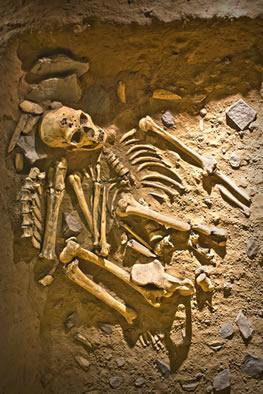 Os estudos arqueológicos e paleológicos auxiliam-nos a entender um pouco mais sobre nossas origens